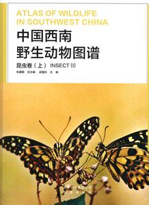 中国西南野生動物図譜  昆虫巻上冊