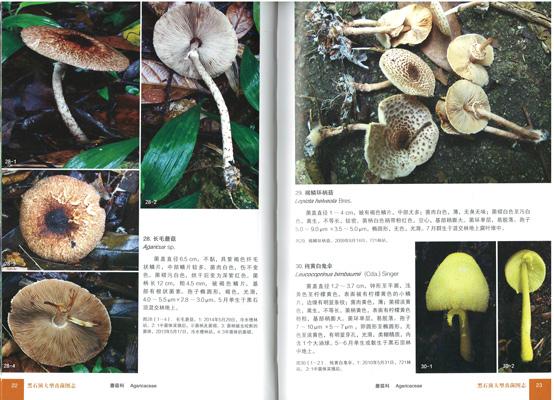 黒石頂大型真菌図志