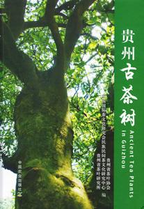 貴州古茶樹