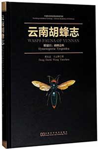 雲南胡蜂志-膜翅目胡蜂総科